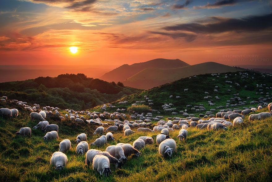 sheep-herds-around-the-world-13