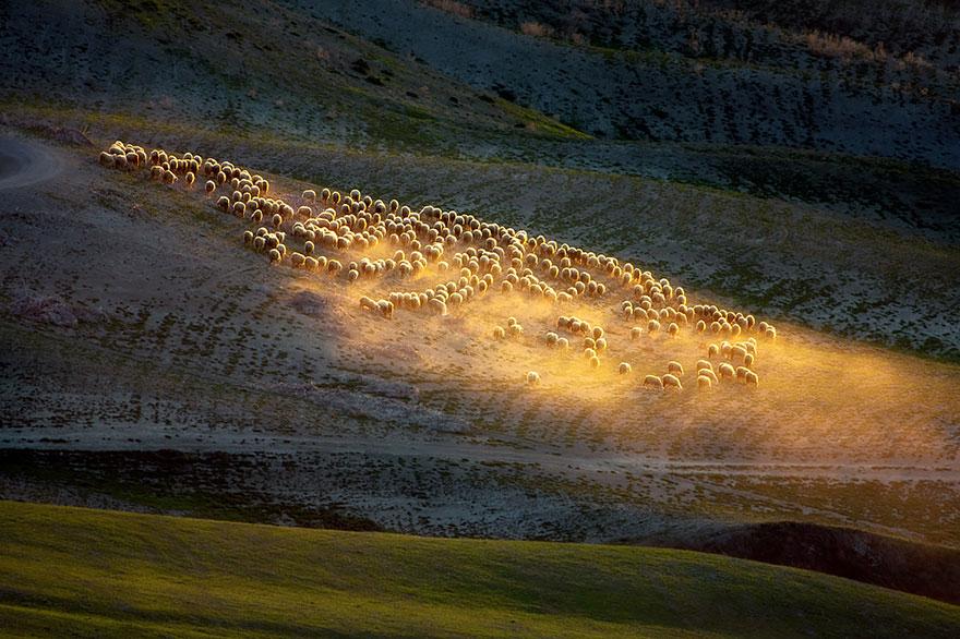 sheep-herds-around-the-world-6