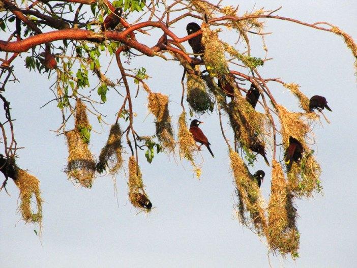 animal-architecture-nests-3-2