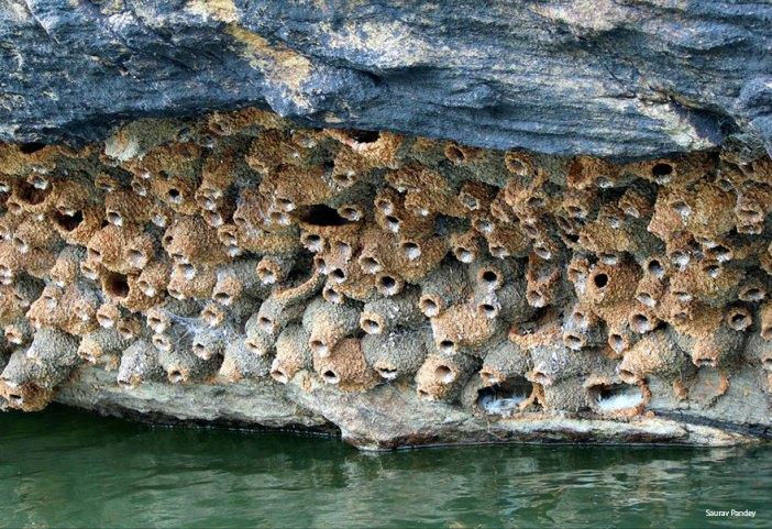 animal-architecture-nests-6-1
