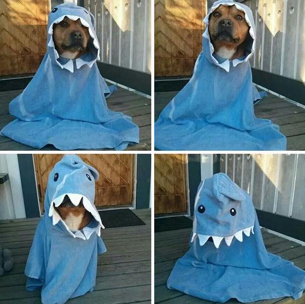 Lovely Shark  Dog