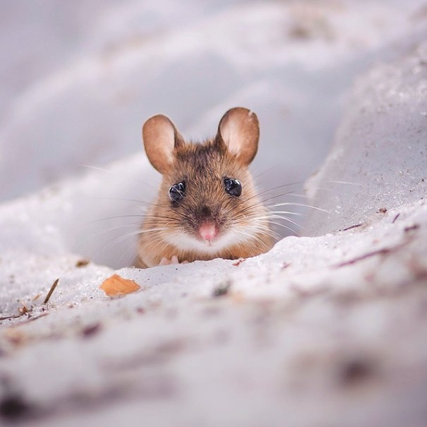 fotos-alimentando-animales-salvajes-finlandia-konsta-punkka (19)