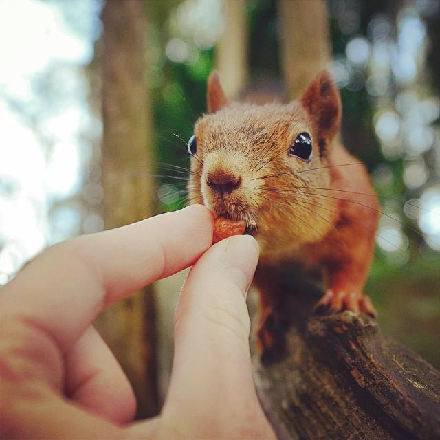 fotos-alimentando-animales-salvajes-finlandia-konsta-punkka (5)