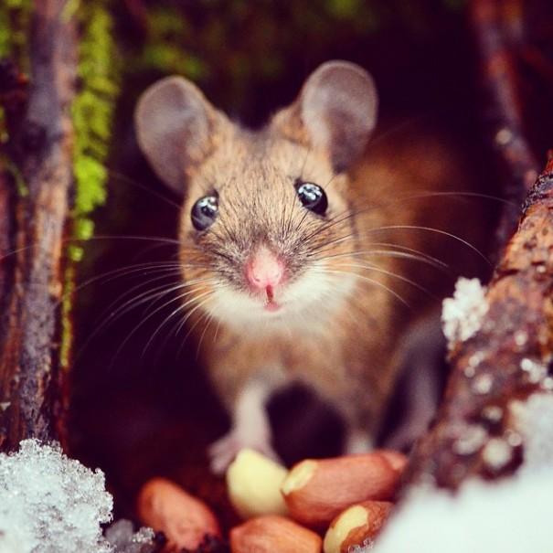 fotos-alimentando-animales-salvajes-finlandia-konsta-punkka (7)