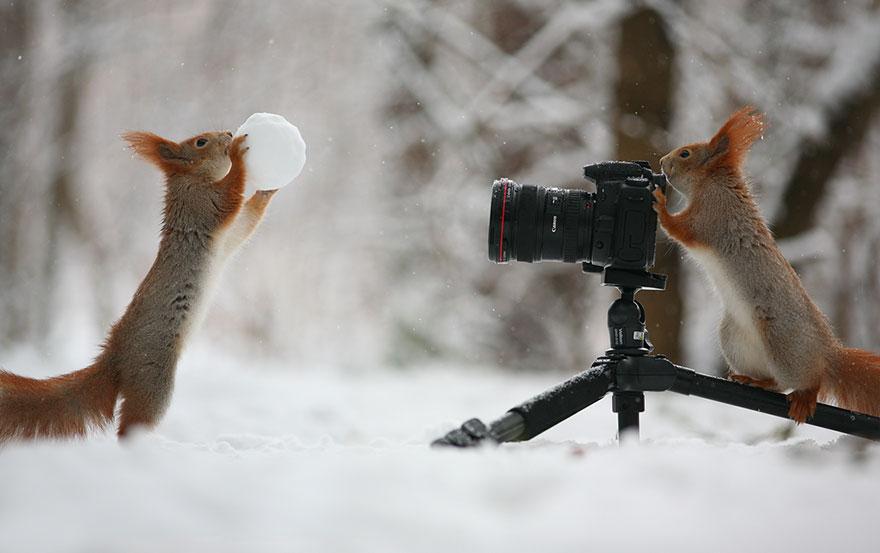fotos-ardillas-invierno-rusia-vadim-trunov (6)