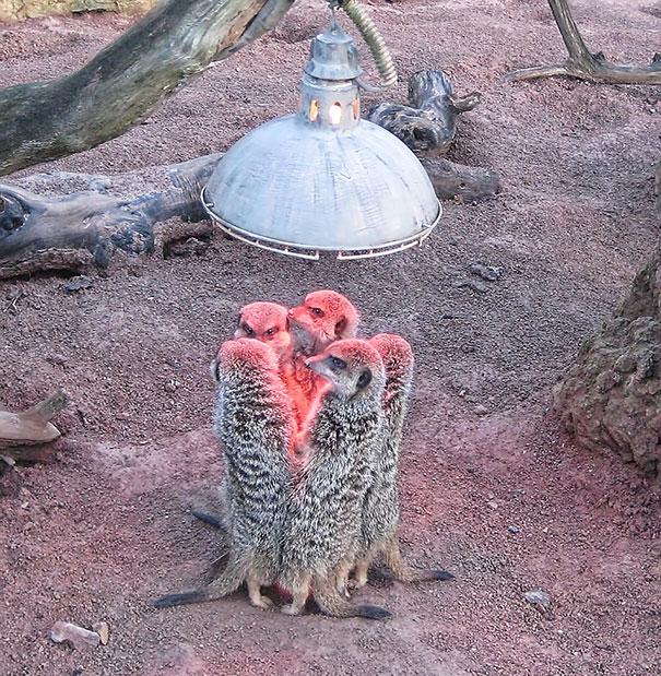 animales-que-aman-al-calor (7)