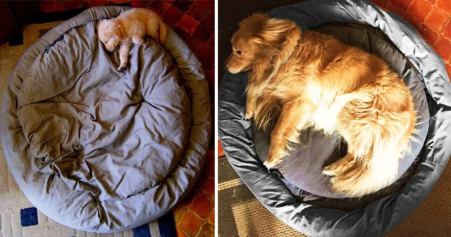 antes-despues-perros-creciendo (19)
