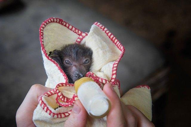 crias-adorables-hospital-de-murcielagos-australia (6)
