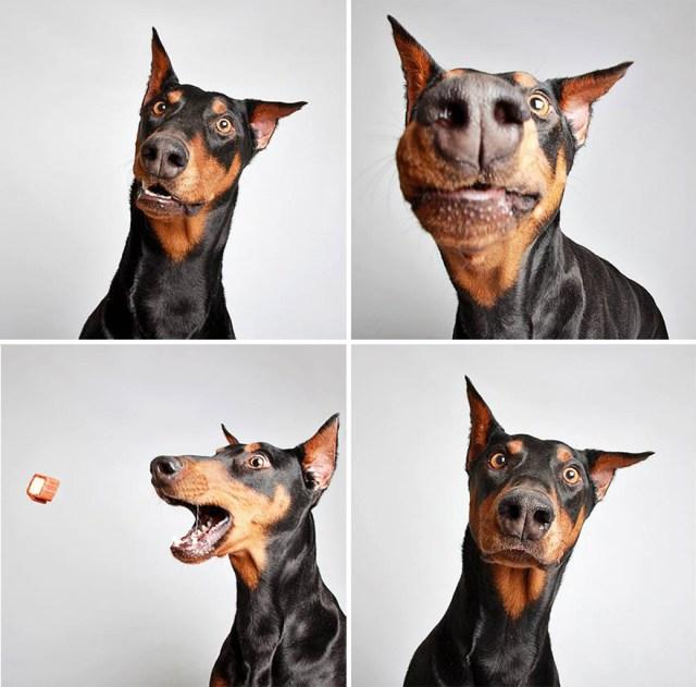 fotomaton-adopcion-perros-organizacion-humanitaria-utah (11)
