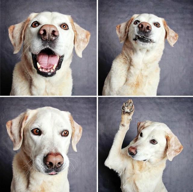 fotomaton-adopcion-perros-organizacion-humanitaria-utah (14)