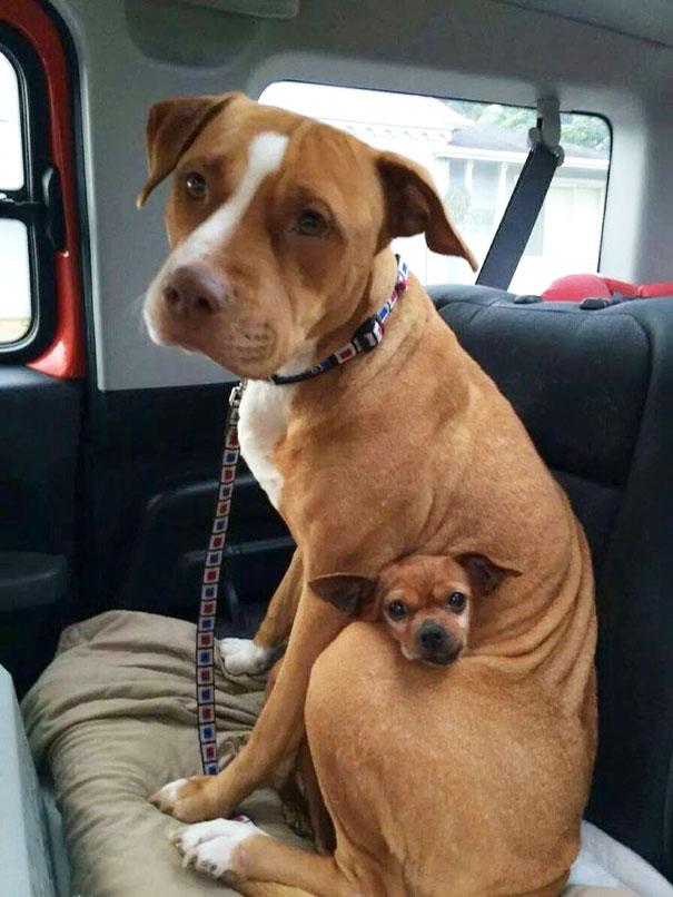 perros-mejores-amigos (1)