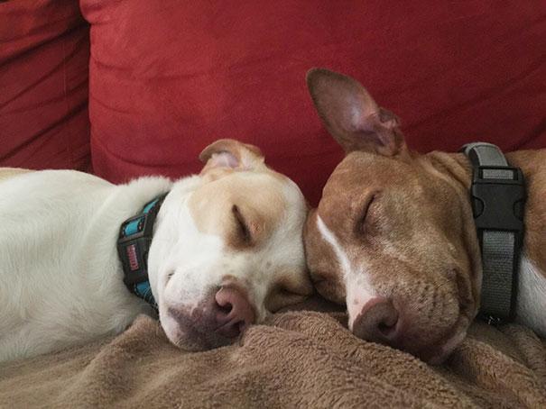perros-mejores-amigos (13)