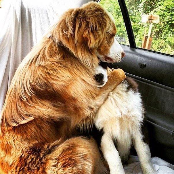 perros-mejores-amigos (2)