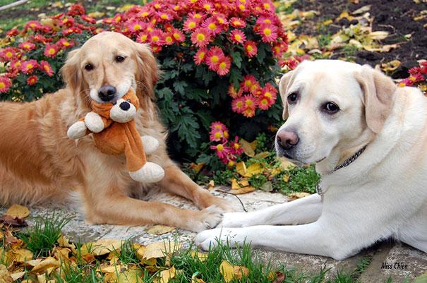 perros-mejores-amigos (21)