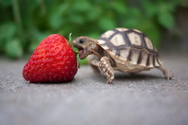 animales-comiendo-bayas (3)
