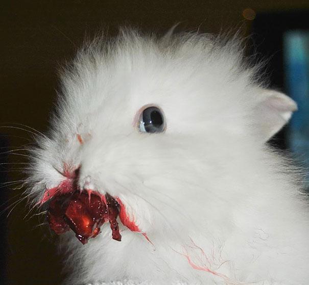 animales-comiendo-bayas (6)
