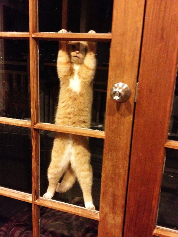 animales-pidiendo-entrar (11)