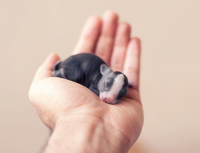 fotos-crias-conejos-creciendo (10)