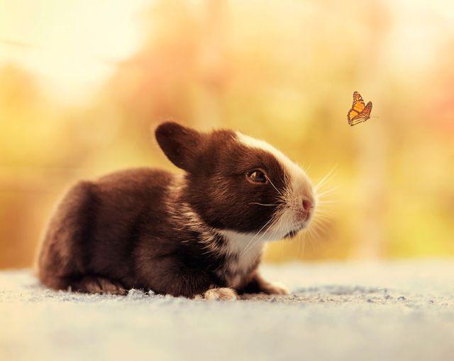 fotos-crias-conejos-creciendo (15)