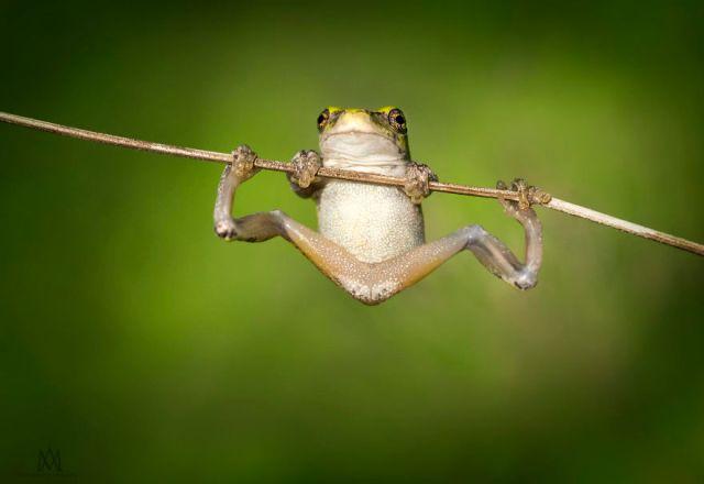 fotos-curiosas-ranas-anfibios (1)
