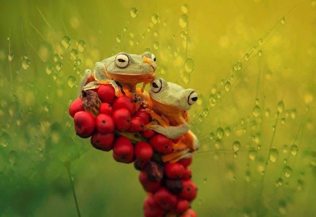 fotos-curiosas-ranas-anfibios (4)