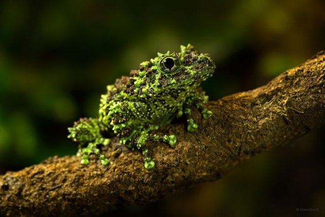 fotos-curiosas-ranas-anfibios (7)