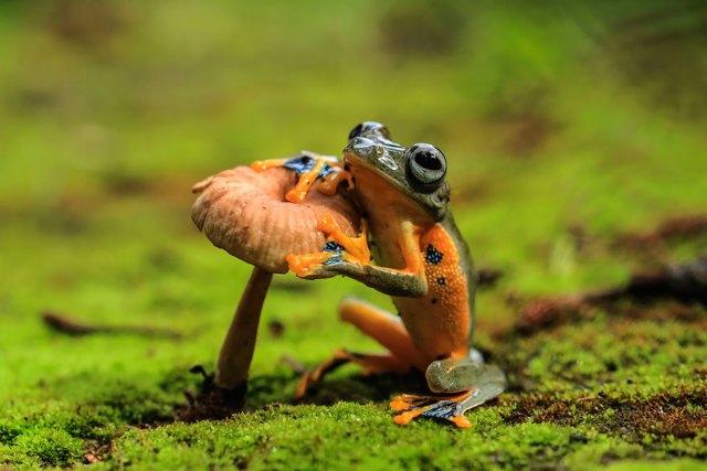 fotos-curiosas-ranas-anfibios (9)