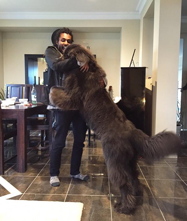 fotos-divertidas-perros-gigantes (1)
