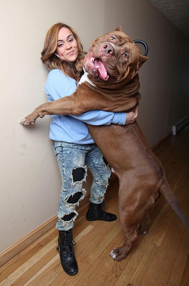 fotos-divertidas-perros-gigantes (10)