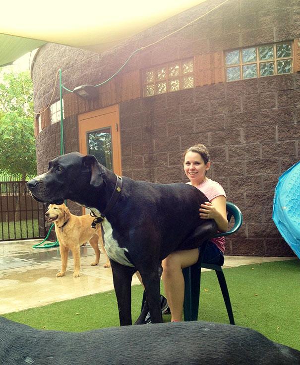 fotos-divertidas-perros-gigantes (28)