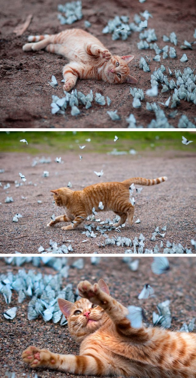 mariposas-con-animales (1)
