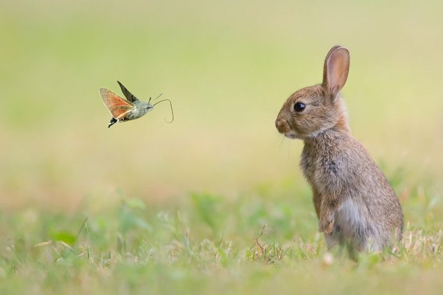 mariposas-con-animales (11)