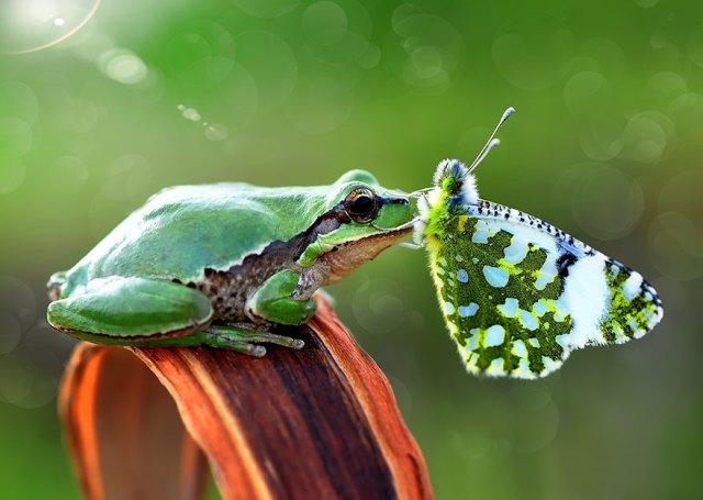 mariposas-con-animales (12)