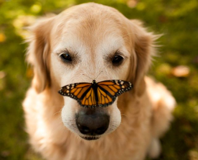 mariposas-con-animales (14)