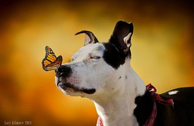 mariposas-con-animales (15)