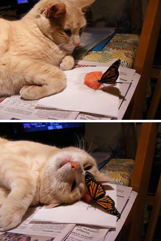mariposas-con-animales (6)