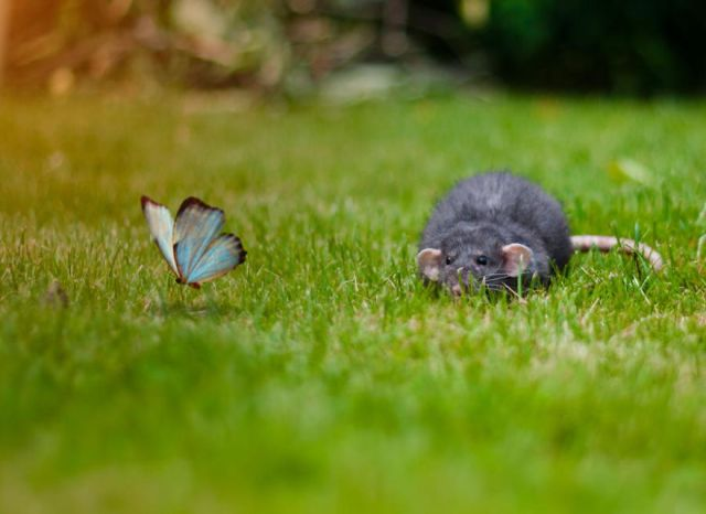 mariposas-con-animales (8)
