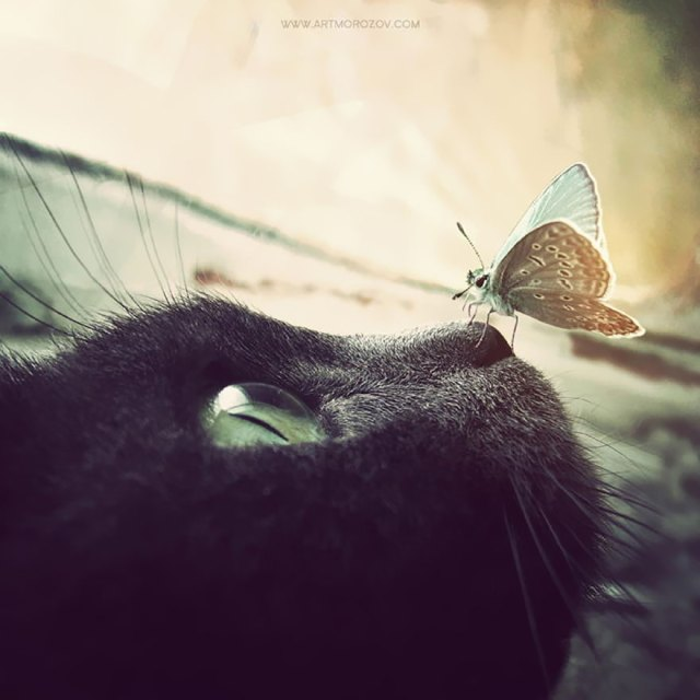 mariposas-con-animales (9)