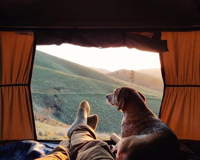 perro-maddie-viajes-moto-theron-humphrey (3)
