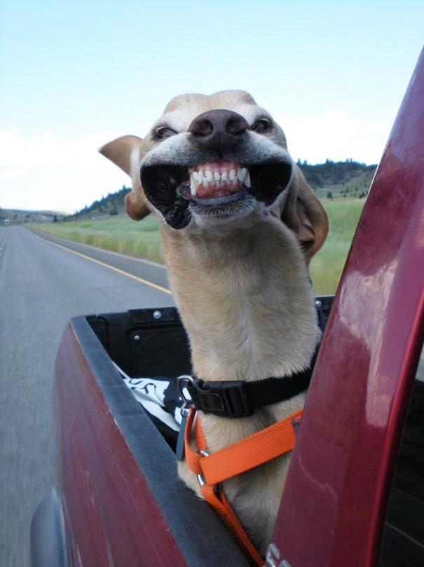 perros-disfrutando-viaje-coche (2)