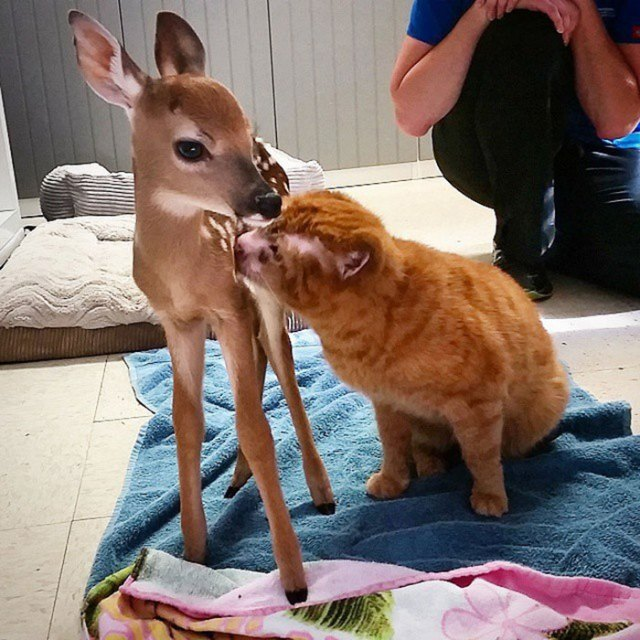 russel-gato-superviviente-cuida-animales-hospital (12)