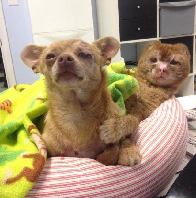 russel-gato-superviviente-cuida-animales-hospital (14)