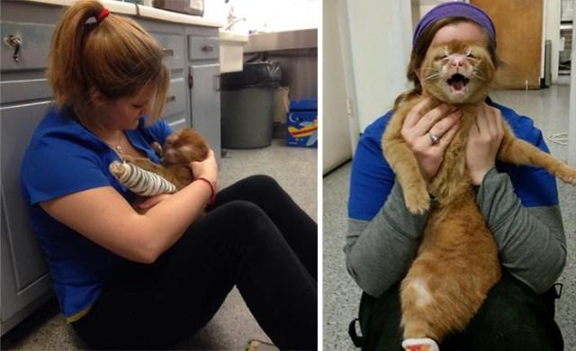 russel-gato-superviviente-cuida-animales-hospital (3)