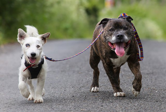 amistad-animal-perros-abandonados-ciego-glenn-guia-buzz (1)