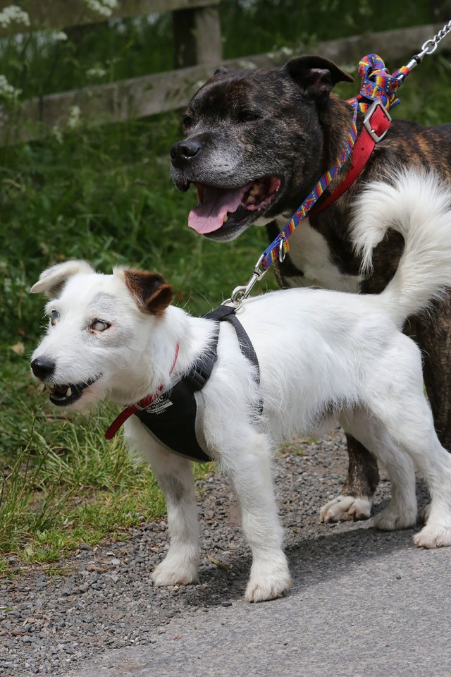 amistad-animal-perros-abandonados-ciego-glenn-guia-buzz (2)