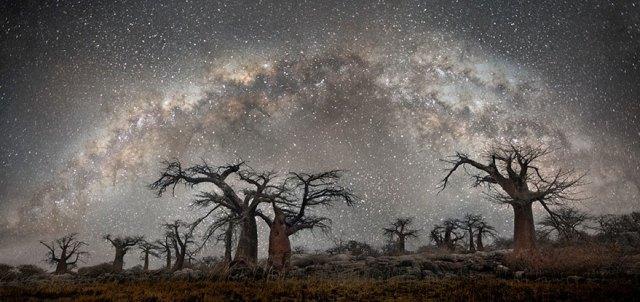 fotos-arboles-viejos-noche-estrellas-beth-moon (5)