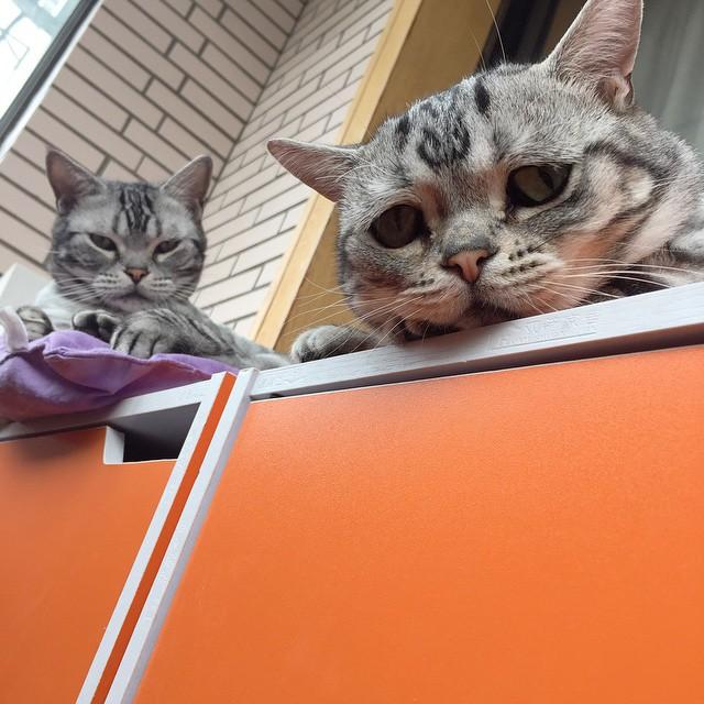 gato-triste-luhu-maggie-liu (11)
