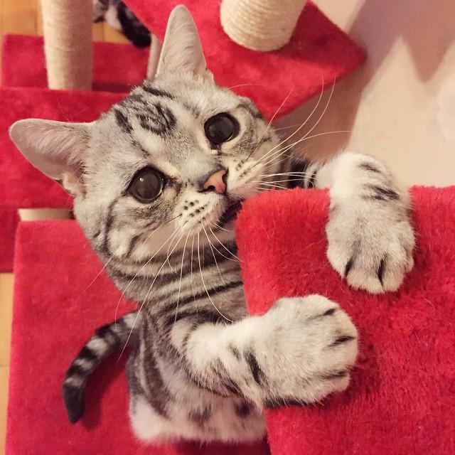 gato-triste-luhu-maggie-liu (4)