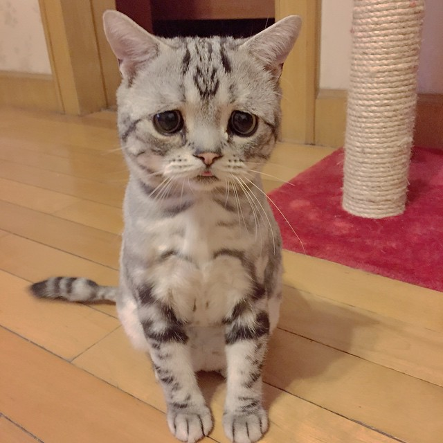 gato-triste-luhu-maggie-liu (9)