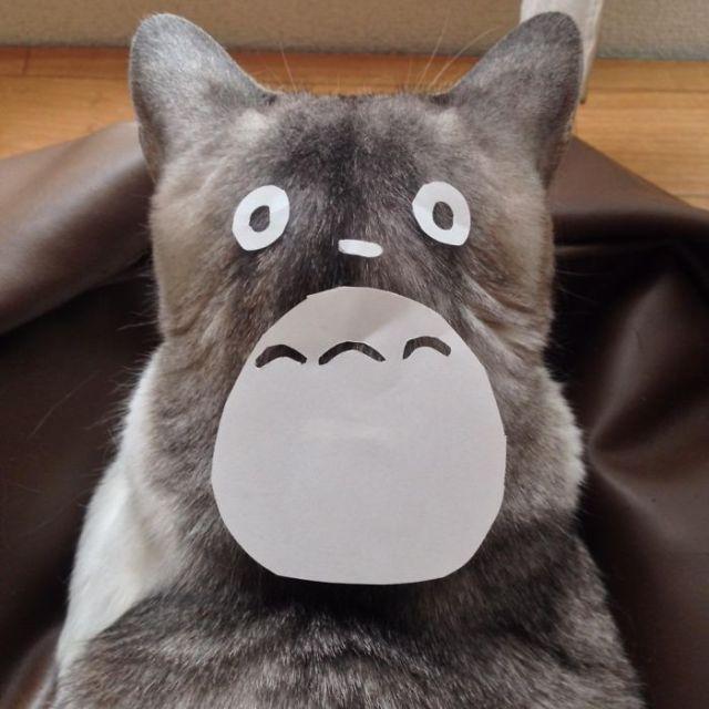 gatos-disfrazados-totoro-duenos-japon (2)